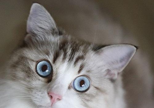 www.dementia-devotion.com Can't a Cat Look at a Queen?